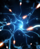 Постер к Биохакинг мозга