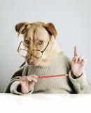 Постер к Не рычите на собаку! Книга о дрессировке людей, животных и самого себя
